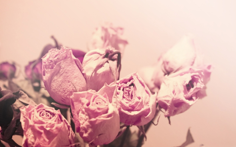 nature-landscapes_widewallpaper_withered-roses_10260